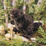 folkmanis_Beaver_puppet_2245.jpg