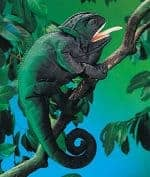 folkmanis_Chameleon_puppet_2215.jpg