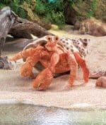 folkmanis_Crab_Hermit_puppet_2867.jpg