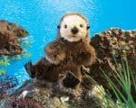 folkmanis_Otter_Baby_Sea_puppet_2960.jpg