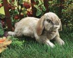 folkmanis_Rabbit_Holland_Lop_puppet_2892.jpg