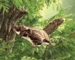 folkmanis_Squirrel_Flying_puppet_2580.jpg