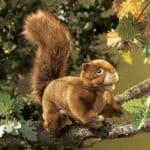 folkmanis_Squirrel_Red_puppet_2880.jpg