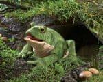 folkmanis_Toad_puppet_3099.jpg
