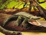 folkmanis_alligator_puppet_2130.jpg